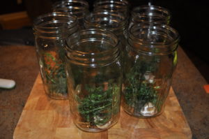 Jars filled with dill and garlic.  This is where I added a few hot peppers to a couple jars to see what they'd taste like.  You can also add red pepper flakes.